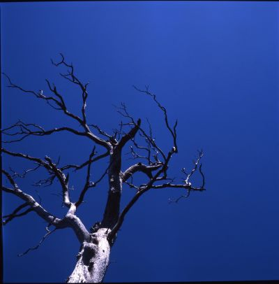 dead tree 2009 by Ella Condon